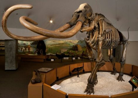 wpid-exhibits_mammoth.jpeg